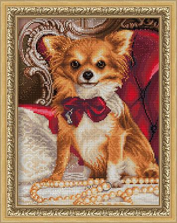 Chihuahua mit Schleife