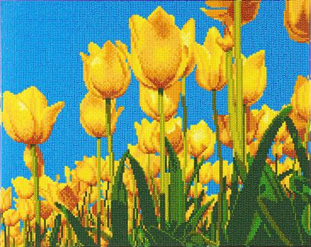 Malen nach Zahlen Bild Frühlingstulpen - CAK-A89 von Sonstiger Hersteller