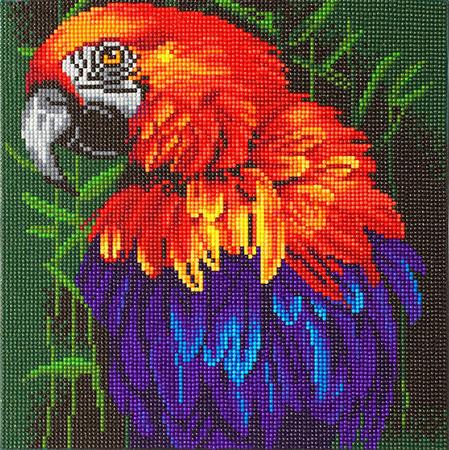Malen nach Zahlen Bild Tropischer Vogel - CAK-A85 von Craft Buddy