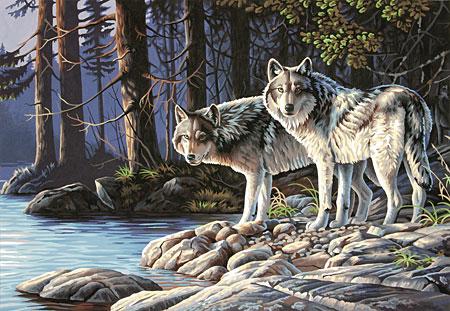 Malen nach Zahlen Bild Graue Wölfe - 91445 von Sonstiger Hersteller