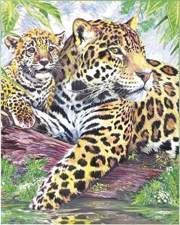 Malen nach Zahlen Bild Gepard - CPN10 von Sonstiger Hersteller