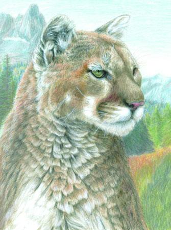 Malen nach Zahlen Bild Puma - CPN17 von Sonstiger Hersteller