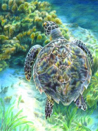Malen nach Zahlen Bild Seeschildkröte - CPN20 von Sonstiger Hersteller