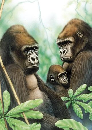 Malen nach Zahlen Bild Gorillafamilie - OPSMIN101 von Sonstiger Hersteller