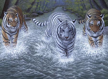 Malen nach Zahlen Bild Tiger im Fluss - PJL34 von Sonstiger Hersteller
