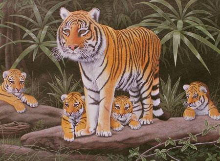 Malen nach Zahlen Bild Tigerkinder mit ihrer Mutter - PJL39 von Sonstiger Hersteller