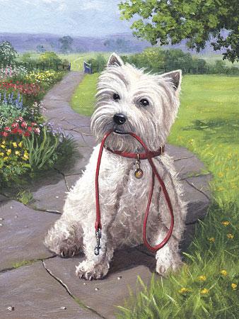 Malen nach Zahlen Bild Hund mit Leine - PJS49 von Sonstiger Hersteller
