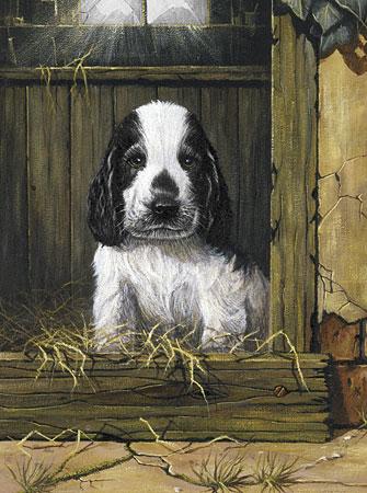 Malen nach Zahlen Bild Hundehütte - PJS67 von Sonstiger Hersteller