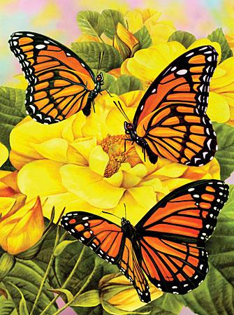 Malen nach Zahlen Bild Monarch-Schmetterling - PJS68 von Sonstiger Hersteller
