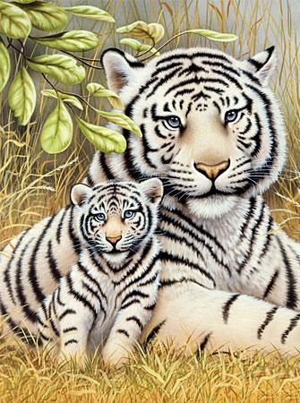 Malen nach Zahlen Bild Weiße Tiger - PJS76 von Sonstiger Hersteller