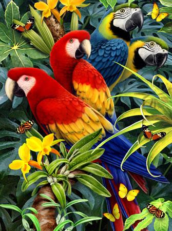 Malen nach Zahlen Bild Bunte Papageienvielfalt - PJS83 von Sonstiger Hersteller