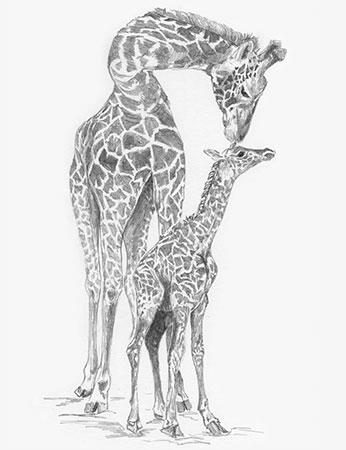 Malen nach Zahlen Bild Süße Giraffen - SKBN13 von Sonstiger Hersteller