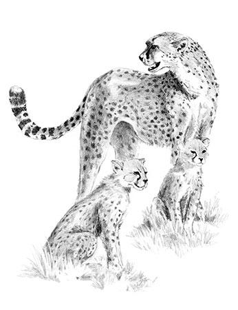 Malen nach Zahlen Bild Süße Leoparden - SKBN15 von Sonstiger Hersteller