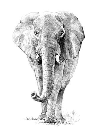 Malen nach Zahlen Bild Einsamer Elefant - SKBN16 von Sonstiger Hersteller