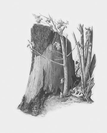 Malen nach Zahlen Bild Baumstumpf - SKBN9 von Sonstiger Hersteller