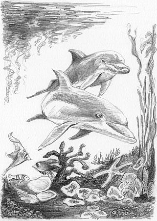 Malen nach Zahlen Bild Delphine - SKMIN101 von Sonstiger Hersteller