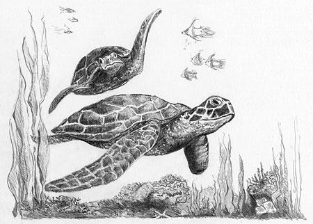 Malen nach Zahlen Bild Schildkröte - SKMIN104 von Sonstiger Hersteller