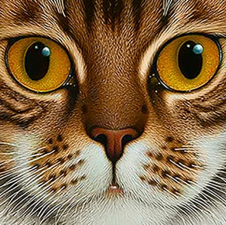 Katze mit kupferfarbenen Augen