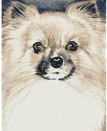 Flauschiger Hund