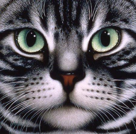 Malen nach Zahlen Bild Cats Face - AZ-1085 von Sonstiger Hersteller