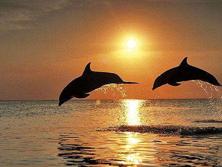 Malen nach Zahlen Bild Springende Delfine - AZ-1089 von Sonstiger Hersteller