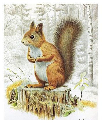 Eichhörchen auf dem Baumstamm