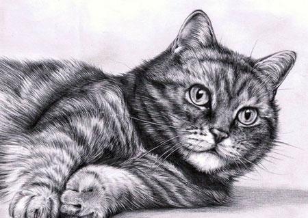Malen nach Zahlen Bild Entspannte Katze - AZ-1100 von Artibalta