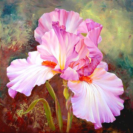 Pinke Schwertlilien