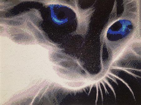 Durchdringender Katzenblick