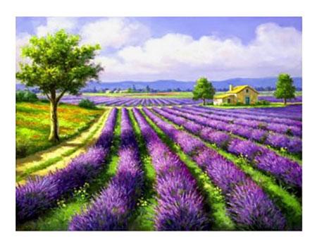 Malen nach Zahlen Bild Lavendel Feld - AZ-1338 von Sonstiger Hersteller