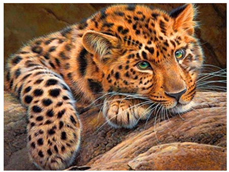 Ruhiger Leopard