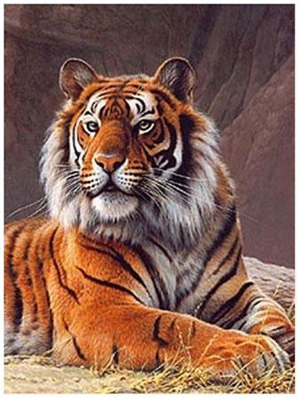 Malen nach Zahlen Bild Wachsamer Tiger - AZ-1384 von Sonstiger Hersteller