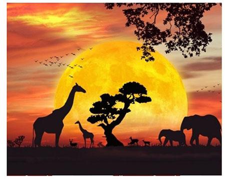 Malen nach Zahlen Bild Auf Safari - AZ-1397 von Sonstige