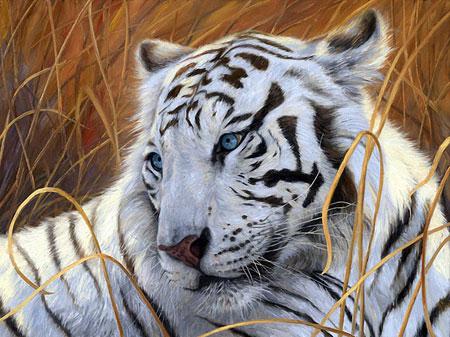 Malen nach Zahlen Bild Weißer Tiger - AZ-1401 von Sonstiger Hersteller