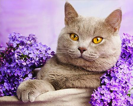 Malen nach Zahlen Bild Katze in Flieder gehüllt - AZ-1417 von Sonstiger Hersteller