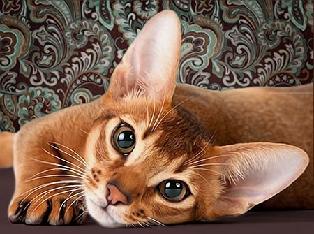 Malen nach Zahlen Bild Niedliche Katze - AZ-1458 von Sonstiger Hersteller
