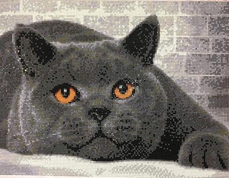 Malen nach Zahlen Bild Britisch Kurzhaar Katze - AZ-1463 von Sonstiger Hersteller