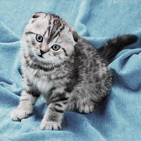 Malen nach Zahlen Bild Zahmes Katzenkind - AZ-1465 von Sonstiger Hersteller