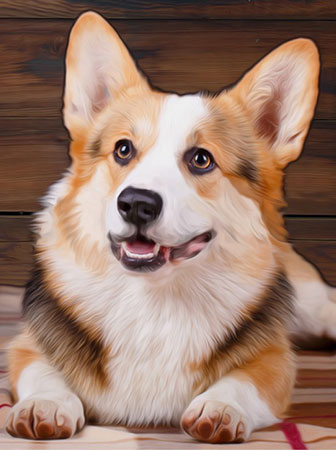 Malen nach Zahlen Bild Hundeporträt - AZ-1466 von Sonstiger Hersteller