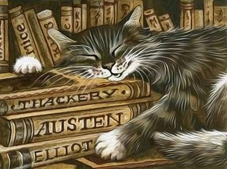 Katze im Bücherregal