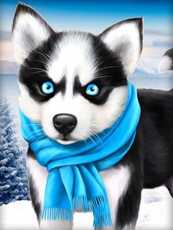 Husky mit blauem Schal