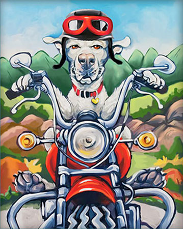 Hund auf dem Motorrad