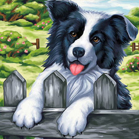 Border Collie am Zaun