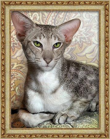 Malen nach Zahlen Bild Verschlagene Katze - AZ-1728 von Sonstiger Hersteller