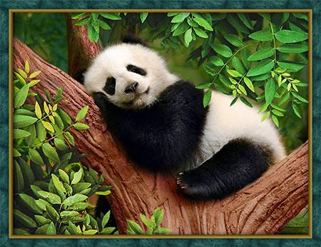 Malen nach Zahlen Bild Schlafender Panda - AZ-1826 von Artibalta
