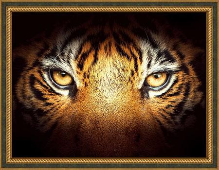 Malen nach Zahlen Bild Tigerblick - AZ-1827 von Artibalta