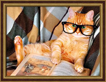 Lesende Katze