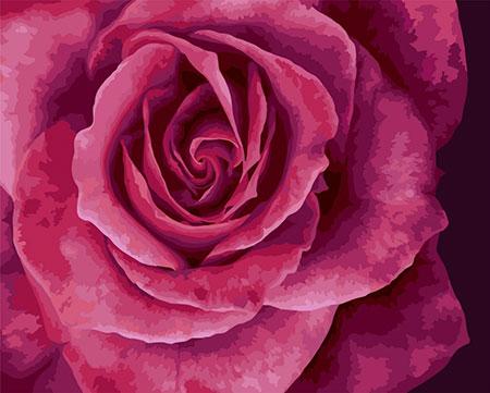 Malen nach Zahlen Bild Rosenblätter - B114 von Artibalta