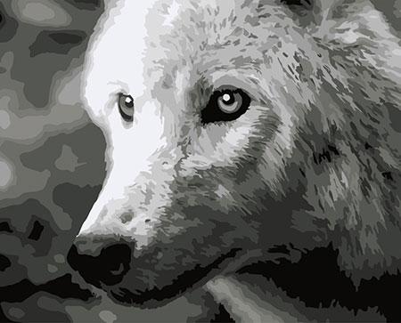 Malen nach Zahlen Bild Weißer Wolf  - F011 von Artibalta
