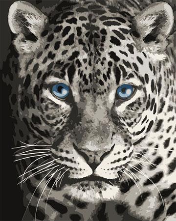 Blauäugiger Leopard